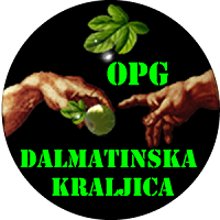 Dalmatinska kraljica